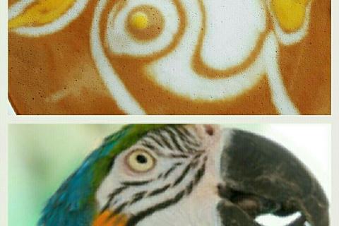 latte_art70